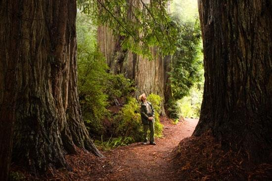 /Files/images/californias-giant-redwoods.jpg